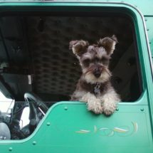 Which Dog Is the Best Companion for a Trucker?