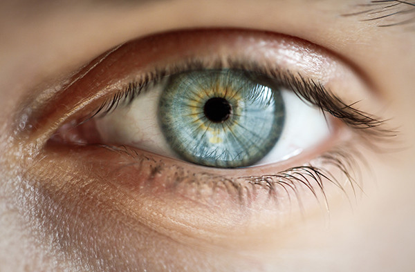3 Facts about Sight Glass